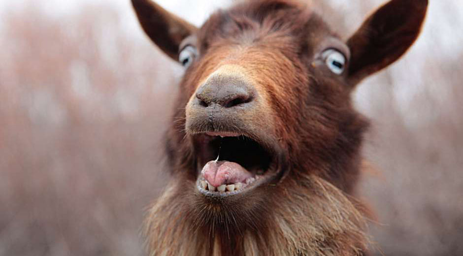 How to fuck a goat picture 93