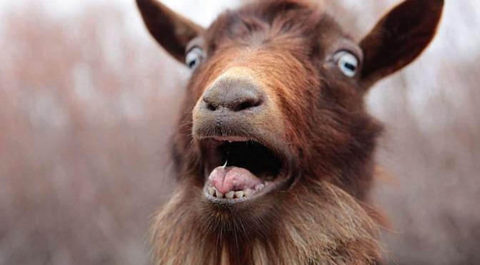 The Fucking Goat Problem