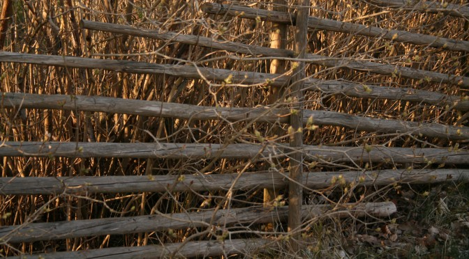 I'm putting up fences in the creative wilderness…